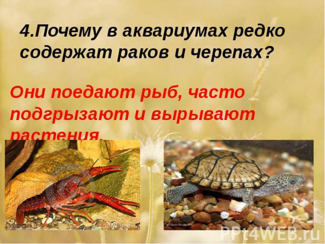 4.Почему в аквариумах редко содержат раков и черепах?Они поедают рыб, часто подгрызают и вырывают растения.