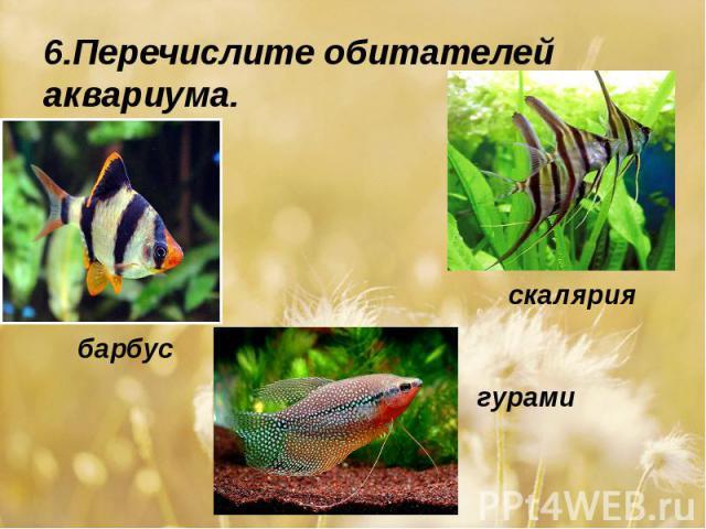 6.Перечислите обитателей аквариума.