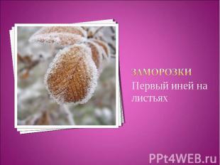 заморозкиПервый иней на листьях