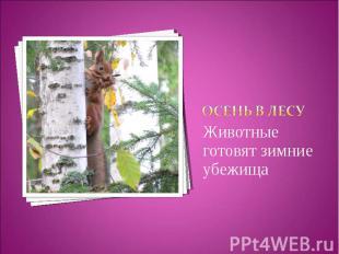 Осень в лесуЖивотные готовят зимние убежища