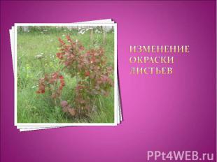 Изменение окраски листьев