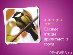 Миграции птицЛесные птицы прилетают в город
