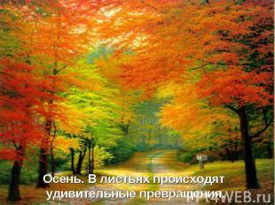 Осень. В листьях происходят удивительные превращения.