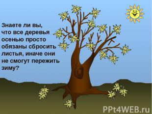 Знаете ли вы, что все деревья осенью простообязаны сбросить листья, иначе они не