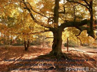 Зимой обычно замедляется рост деревьев и ток сока внутри ствола. И тогда листья