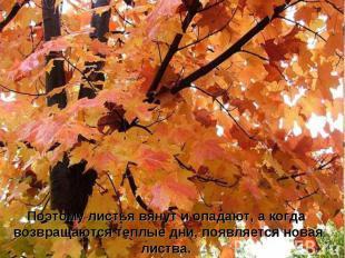 Поэтому листья вянут и опадают, а когда возвращаются теплые дни, появляется нова