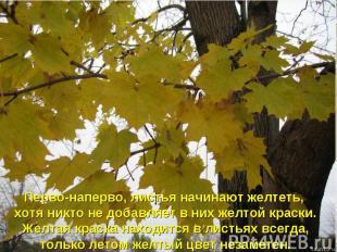 Перво-наперво, листья начинают желтеть, хотя никто не добавляет в них желтой кра