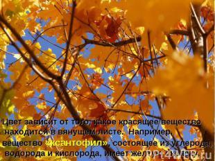 Цвет зависит от того, какое красящее вещество находится в вянущем листе. Наприме