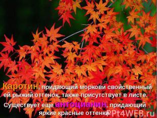 Каротин, придающий моркови свойственный ей рыжий оттенок, также присутствует в л