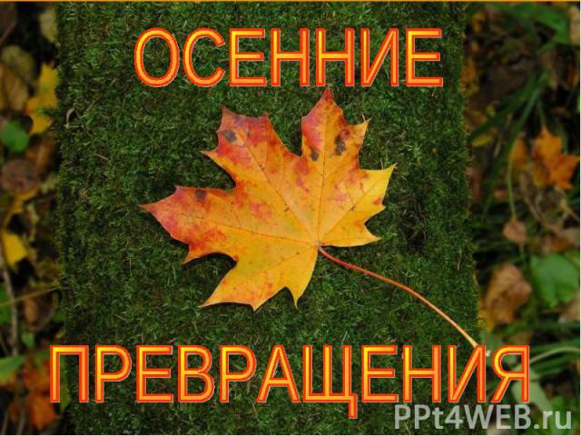 Осенние превращения
