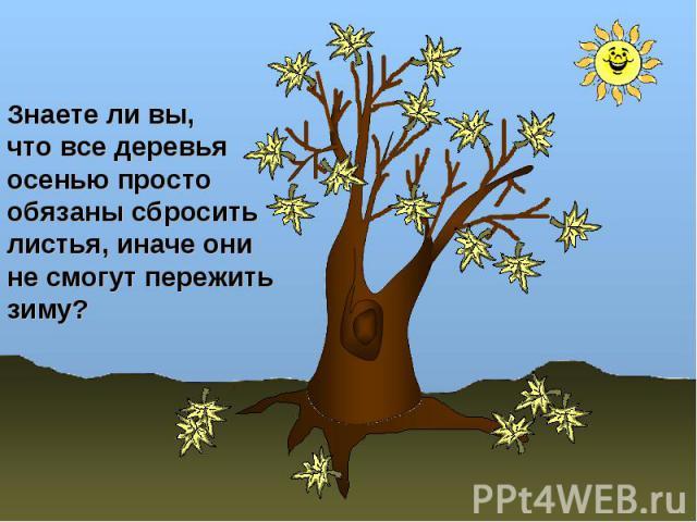 Знаете ли вы, что все деревья осенью простообязаны сбросить листья, иначе они не смогут пережить зиму?
