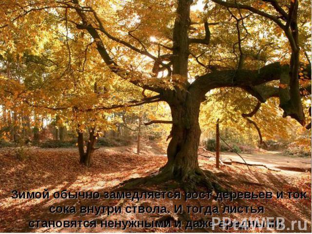 Зимой обычно замедляется рост деревьев и ток сока внутри ствола. И тогда листья становятся ненужными и даже вредными.