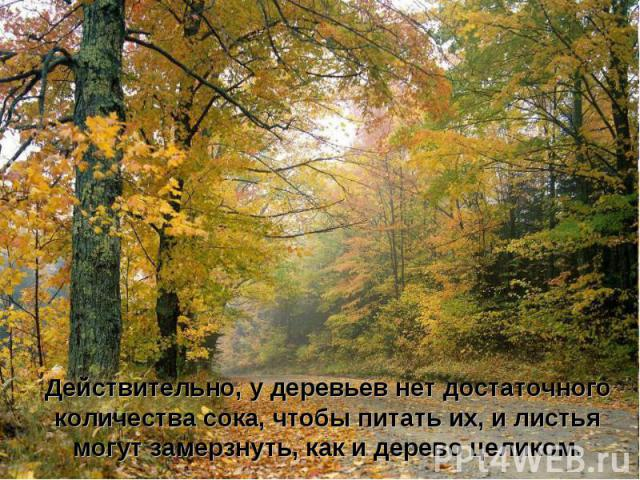 Действительно, у деревьев нет достаточного количества сока, чтобы питать их, и листья могут замерзнуть, как и дерево целиком.