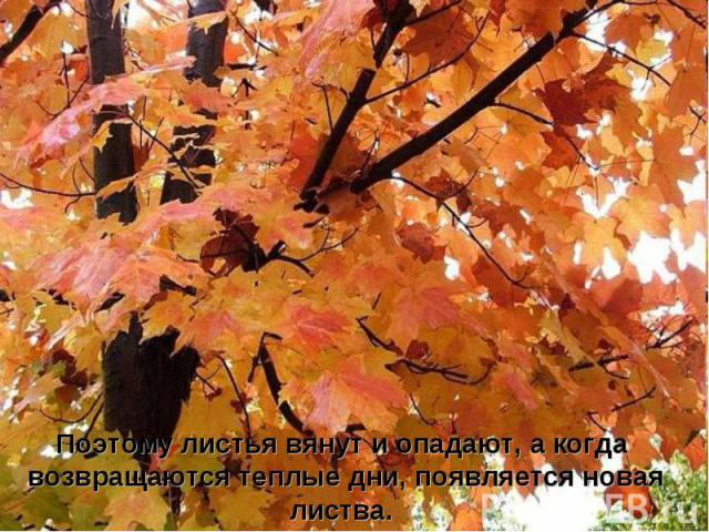 Поэтому листья вянут и опадают, а когда возвращаются теплые дни, появляется новая листва.