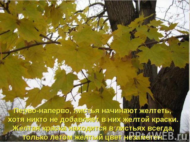 Перво-наперво, листья начинают желтеть, хотя никто не добавляет в них желтой краски. Желтая краска находится в листьях всегда, только летом желтый цвет незаметен.