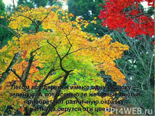 Летом все деревья имеют одну окраску — зеленую. А вот осенью те же самые листья приобретают различную окраску. Откуда берутся эти цвета?