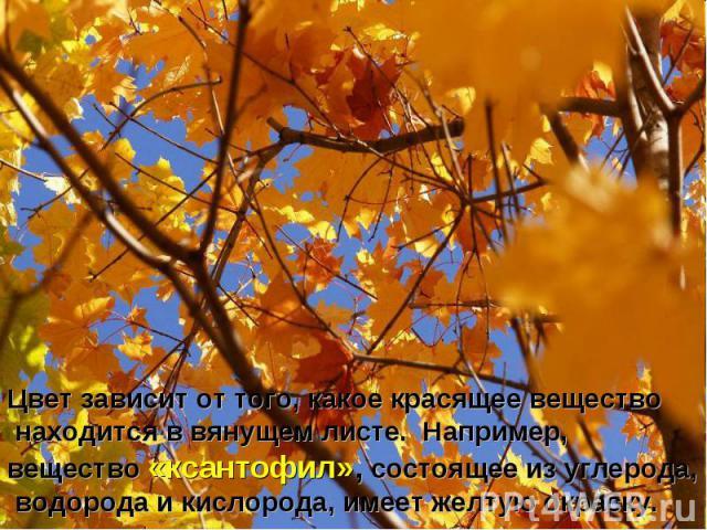 Цвет зависит от того, какое красящее вещество находится в вянущем листе. Например, вещество «ксантофил», состоящее из углерода, водорода и кислорода, имеет желтую окраску.