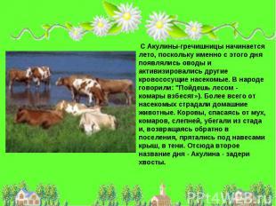 С Акулины-гречишницы начинается лето, поскольку именно с этого дня появлялись ов