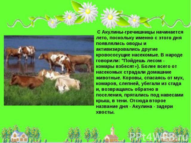 С Акулины-гречишницы начинается лето, поскольку именно с этого дня появлялись оводы и активизировались другие кровососущие насекомые. В народе говорили: