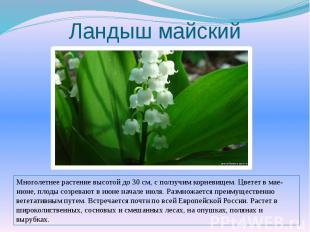 Ландыш майскийМноголетнее растение высотой до 30 см, с ползучим корневищем. Цвет