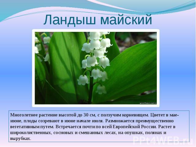 Ландыш майскийМноголетнее растение высотой до 30 см, с ползучим корневищем. Цветет в мае-июне, плоды созревают в июне начале июля. Размножается преимущественно вегетативным путем. Встречается почти по всей Европейской России. Растет в широколиственн…