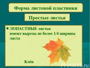 Форма листовой пластинкиПростые листьяЛОПАСТНЫЕ листьяимеют вырезы не более 1/4