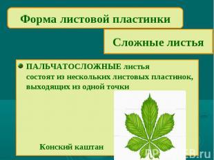 Форма листовой пластинкиСложные листьяПАЛЬЧАТОСЛОЖНЫЕ листьясостоят из нескольки