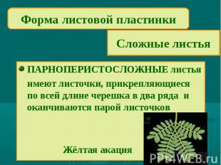 Форма листовой пластинкиСложные листьяПАРНОПЕРИСТОСЛОЖНЫЕ листьяимеют листочки,