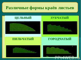 Различные формы краёв листьев