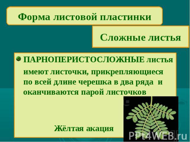 Форма листовой пластинкиСложные листьяПАРНОПЕРИСТОСЛОЖНЫЕ листьяимеют листочки, прикрепляющиеся по всей длине черешка в два ряда и оканчиваются парой листочков Жёлтая акация