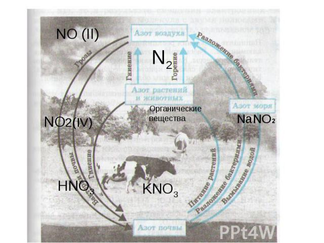 N2NO (II)