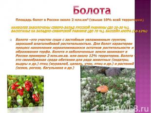 БолотаНаиболее заболочены северо-запад Русской равнины (до 20-30 %), Васюганье н