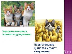 Хорошенькие котята ползают под ивушками.Пушистенькие цыплята играют камушками.