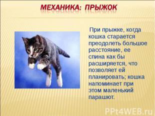 Механика: ПРЫЖОК При прыжке, когда кошка старается преодолеть большое расстояние