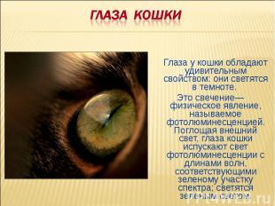 ГЛАЗА КОШКИГлаза у кошки обладают удивительным свойством: они светятся в темноте