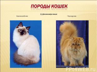 Породы кошек 1) Длинношёрстные Балинезийские Персидские