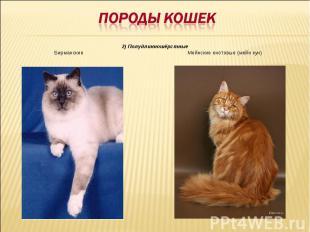Породы кошек2) Полудлинношёрстные Бирманские Мейнские енотовые (мейн кун)