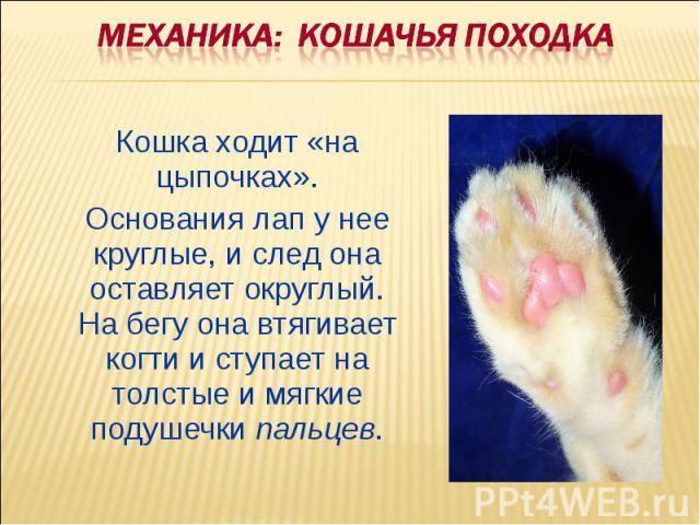 Механика: Кошачья походка Кошка ходит «на цыпочках». Основания лап у нее круглые, и след она оставляет округлый. На бегу она втягивает когти и ступает на толстые и мягкие подушечки пальцев.