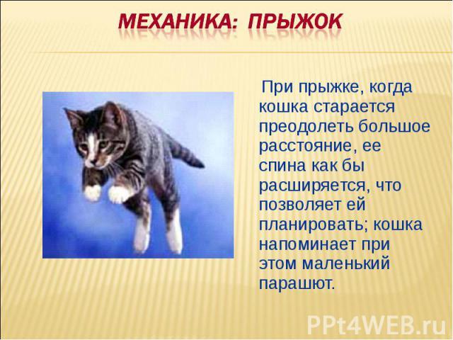Механика: ПРЫЖОК При прыжке, когда кошка старается преодолеть большое расстояние, ее спина как бы расширяется, что позволяет ей планировать; кошка напоминает при этом маленький парашют.