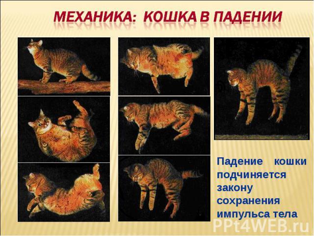 Механика: КОШКА В ПАДЕНИИПадение кошки подчиняется закону сохранения импульса тела