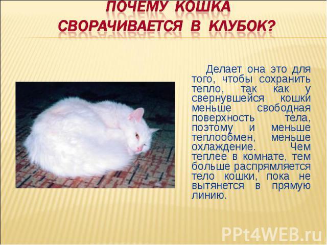 ПОЧЕМУ КОШКА Сворачивается В КЛУБОК? Делает она это для того, чтобы сохранить тепло, так как у свернувшейся кошки меньше свободная поверхность тела, поэтому и меньше теплообмен, меньше охлаждение. Чем теплее в комнате, тем больше распрямляется тело …