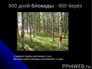 900 дней блокады - 900 берёз В карауле берёзы молчаливо стоят,Молодых краснозвез