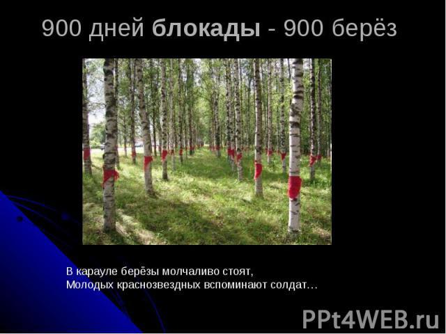 900 дней блокады - 900 берёз В карауле берёзы молчаливо стоят,Молодых краснозвездных вспоминают солдат…