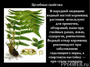 Целебные свойстваВ народной медицине водный настой корневищ растения используют