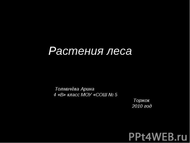 Растения леса Толмачёва Арина 4 «В» класс МОУ «СОШ № 5 Торжок 2010 год