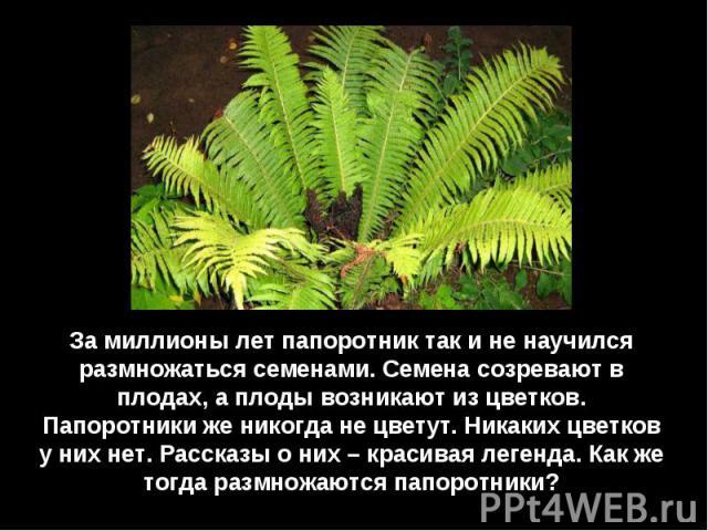 За миллионы лет папоротник так и не научился размножаться семенами. Семена созревают в плодах, а плоды возникают из цветков. Папоротники же никогда не цветут. Никаких цветков у них нет. Рассказы о них – красивая легенда. Как же тогда размножаются па…