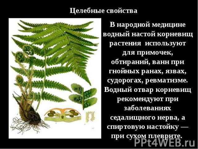 Целебные свойстваВ народной медицине водный настой корневищ растения используют для примочек, обтираний, ванн при гнойных ранах, язвах, судорогах, ревматизме. Водный отвар корневищ рекомендуют при заболеваниях седалищного нерва, а спиртовую настойку…