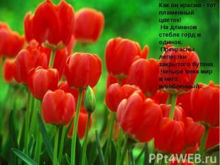 Как он красив - тот пламенный цветок! На длинном стебле горд и одинок. Прекрасны