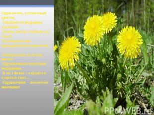 Одуванчик, солнечный цветок, Улыбается медовою улыбкой - Вновь весна ступила на