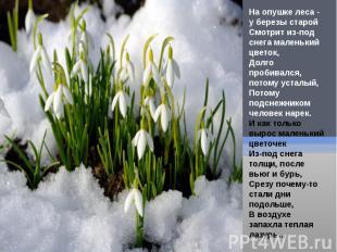 На опушке леса - у березы старойСмотрит из-под снега маленький цветок,Долго проб